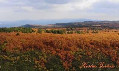 Το δρυόδασος του Μογγοστού στην Κορινθία! (video)
