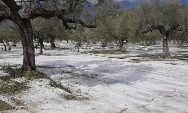 Στο πλευρό των πληγέντων αγροτών από το χαλάζι ο Δήμος Σπάρτης