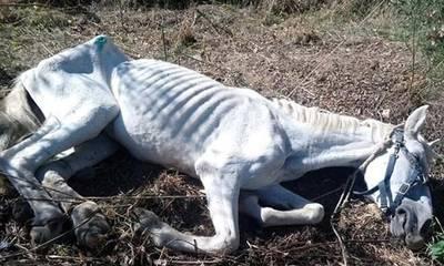 Μεσσηνία: Kι όμως αυτό το άλογο σώθηκε και σε λίγο θα καλπάσει… (photos)