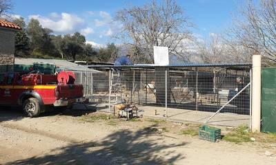 «Εκτελούνται έργα» στους χώρους φιλοξενίας αδέσποτων ζώων του Δήμου Σπάρτης