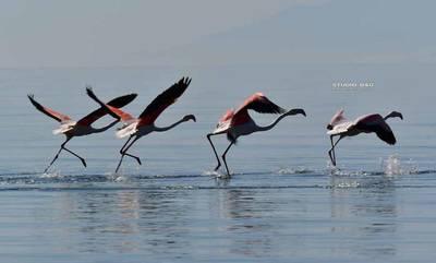 Τα όμορφα Φλαμίνγκο στον υδροβιότοπο του Ναυπλίου!
