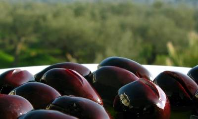 Πετράκος: Η κυβέρνηση προ των ευθυνών της για την ελιά ΠΟΠ Καλαμάτας με μήνυμα και από το ΠεΣυΠ