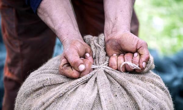 Mια γροθιά, Μεσσήνιοι και Λάκωνες για την κατοχύρωση της ελιάς Καλαμών και της ΠΟΠ Ελιάς Καλαμάτας