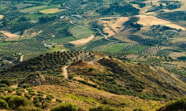 Δαβάκης: Έρχονται λύσεις για τους δασικούς χάρτες