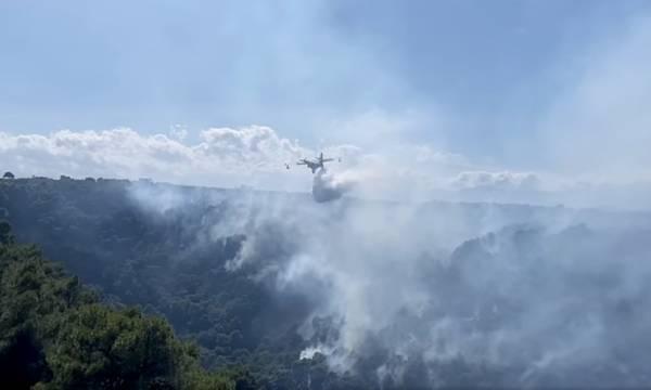 Σώθηκε από την πυρκαγιά το πευκοδάσος, στη Μυρτιά του Δήμου Ευρώτα (video)
