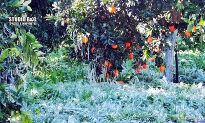 Στον ΕΛΓΑ Τρίπολης ο Δαβάκης για τις αποζημιώσεις των Λακώνων αγροτών