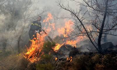Συλλήψεις για φωτιά από αμέλεια σε Αρκαδία και Ηλεία