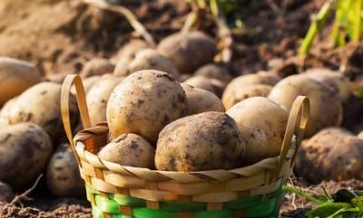 Ειδική Ενίσχυση στους καλλιεργητές της πατάτας