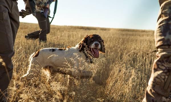 Δαβάκης: «Το κυνηγετικό σκυλί είναι κάτι περισσότερο από ζώο συντροφιάς για τον κυνηγό»