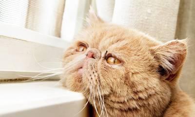 Κι όμως, παθαίνουν και οι γάτες κατάθλιψη!