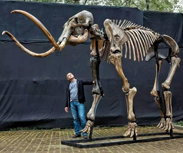 Σκελετός Μαμούθ
