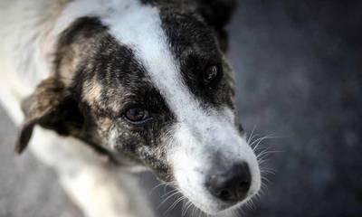Για να σώσει αδέσποτο σκύλο έχασε το ΙΧ του και παρ' ολίγον τη ζωή του! (photos)