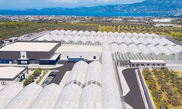 10 επενδύσεις για φαρμακευτική κάνναβη στην Πελοπόννησο - 84 στην υπόλοιπη Ελλάδα. Δείτε που