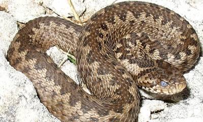 Προσοχή γιατί εδώ πηγαίνουν τα φίδια