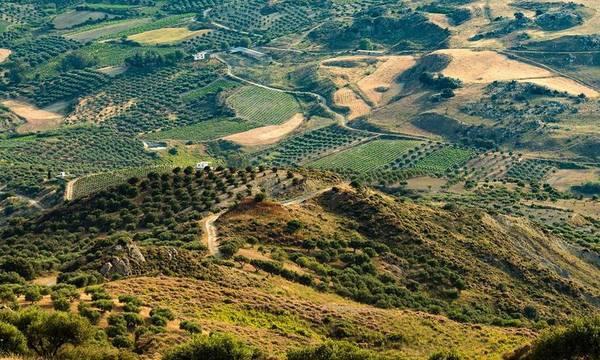 Δημήτρης Νταλιάνης: Η Δημοτική Αρχή Ευρώτα αδιαφορεί για τους δασικούς χάρτες