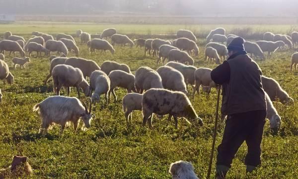 Στ. Αραχωβίτης: Να αφουγκραστεί η κυβέρνηση τα σοβαρά προβλήματα των κτηνοτρόφων, επί τέλους!