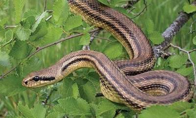 Ήρθε η ώρα να μάθεις πόσο επικίνδυνο είναι το φίδι που θα συναντήσεις! (video)