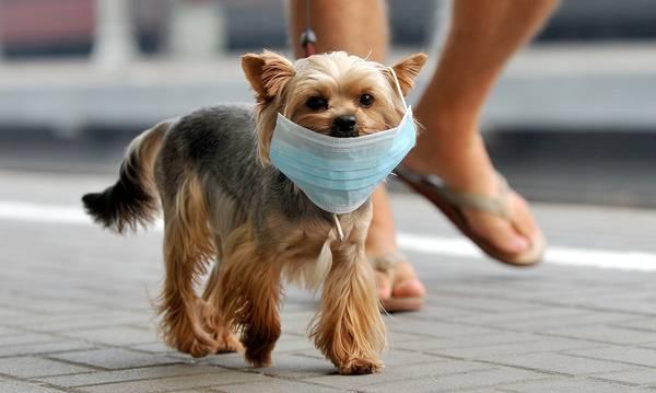 Ανακαλύφθηκε νέος κορoνοϊός σε σκύλους με πιθανότητα μετάδοσης και σε ανθρώπους