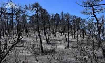 Η πυρκαγιά στα Γεράνεια Όρη η πιο καταστροφική της τελευταίας δεκαετίας (video)
