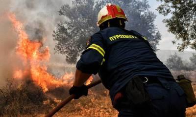 Πυρκαγιά στο Δαφνί του Δήμου Σπάρτης: Εντός 2 ωρών τέθηκε υπό έλεγχο