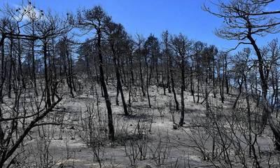 ΠεΣυ: Πετράκος και Δρούγκας για τις δασικές εκτάσεις που κάηκαν