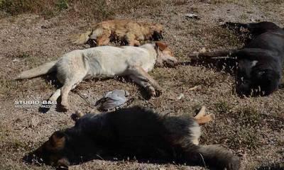 Κτηνωδία στην Αργολίδα: Δεκάδες σκυλιά νεκρά από φόλες (photos)