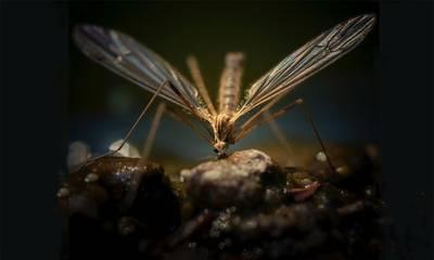 Ντία Τζανετέα: Κίνδυνος για τη δημόσια υγεία στη Λακωνία η καθυστέρηση στις κουνουποκτονίες