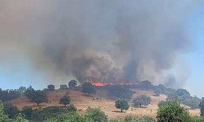 Πυρκαγιά στην Ποταμιά του Δήμου Σπάρτης - Επιχειρούν 31 Πυροσβέστες (video)