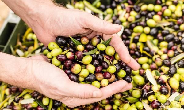 Αυτά είναι τα 15 σημαντικότερα ελληνικά εξαγόμενα αγροτικά προϊόντα