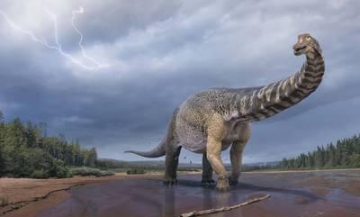 «Αυστραλοτιτάν»: Ο δεινόσαυρος που είχε μήκος όσο ένα γήπεδο μπάσκετ