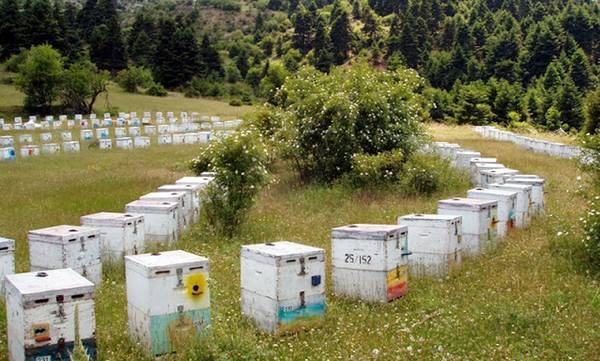 Oι μελισσοκόμοι της Πελοποννήσου είναι δυσαρεστημένοι από την παραγωγή!