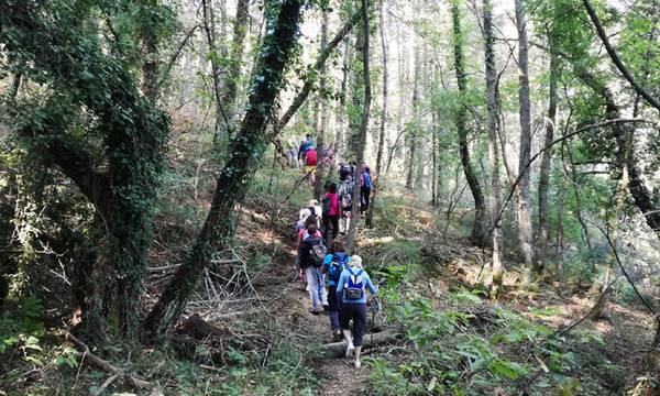 Ο ΕΟΣ Καλαμάτας στο δάσος της Σκιρίτιδας