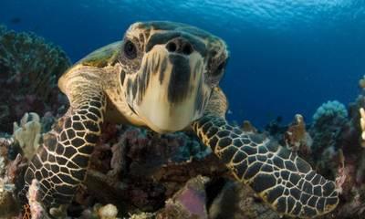 Προσοχή: Γιατί δεν πρέπει να ταΐζεις τις θαλάσσιες χελώνες στην παραλία