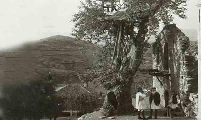 Τα δέντρα, στην Πελοπόννησο, μιλούν για το '21