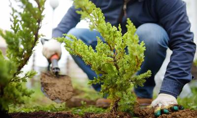 Έρευνα: Το φύτεμα έξτρα δέντρων θα αυξήσει τις καλοκαιρινές βροχές και στη νότια Ευρώπη
