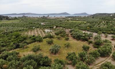 Πωλείται επενδυτικό οικόπεδο 4.168 τ.μ. κοντά στην Γιάλοβα Πύλου