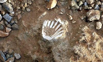 Μοναδικό! Ο χωματόδρομος στη Λακωνία με τα χιλιάδες απολιθωμένα κοχύλια εκατομμυρίων ετών!