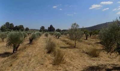 Πωλείται αγροτεμάχιο 110.000 τμ με 1500 ελαιόδεντρα στη Λακωνία