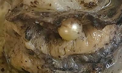 Τύχη «βουνό» για ιδιοκτήτρια ουζερί στη Πάτρα – Τα στρείδια έκρυβαν μαργαριτάρι! (photos)