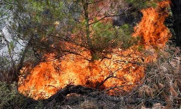 Φωτιά στο Καλέντζι Κορινθίας: Μια σύλληψη για εμπρησμό