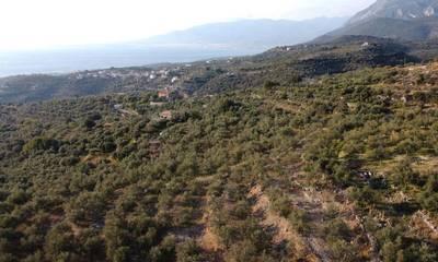 Πωλείται επενδυτικό οικόπεδο 14,500 τ.μ. στην Μεγάλη Μαντίνεια Αβίας