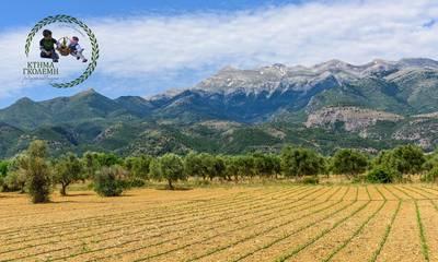 Κτήμα Γκολέμη! Παράδοση, γνώση και αφοσίωση στα αυθεντικά βιολογικά προϊόντα στη γη της Σπάρτης