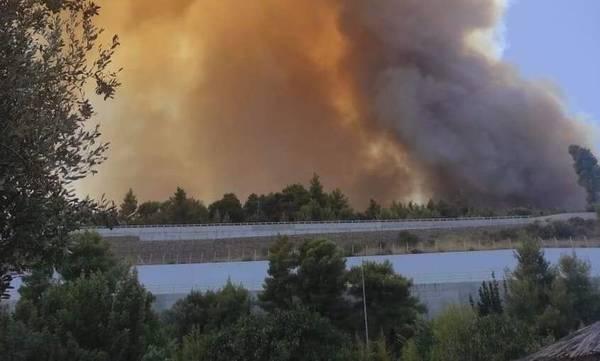 Φωτιά στη Ζήρια Αχαΐας: Απομακρύνθηκαν με ασφάλεια 110 παιδιά από κατασκήνωση