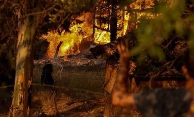 Φωτιά στην Αχαΐα: Ολονύχτια μάχη με τις φλόγες - Κάηκαν σπίτια, 16 άτομα τραυματίστηκαν