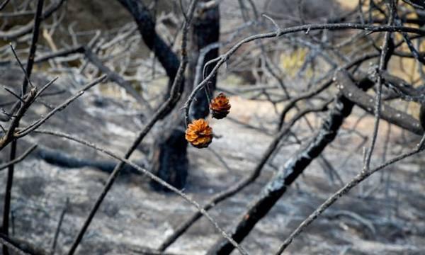 Κατάσβεση πυρκαγιών σε Ζαραφώνα, Γεράκι και Χρύσαφα!