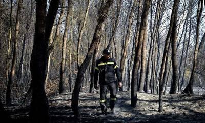 Ουσιαστική προστασία των Δασών από τις πυρκαγιές – Οι Προτάσεις του ΟΙΚΟ.ΣΥ. Λακωνίας
