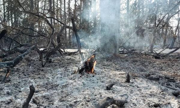 Δήμος Οιχαλίας: Πώς κάνεις αίτηση καταγραφής ζημιών από την πυρκαγιά
