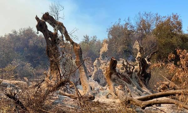 Χρηματοδότηση ΕΛΓΑ για αποκατάσταση αγροτικού τομέα από τις πυρκαγιές