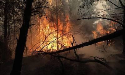 Λαμπρόπουλος: Παραμένει πάρα πολύ δύσκολη η κατάσταση με την φωτιά στην Γορτυνία