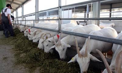 Βοήθεια με 256 τόνους ζωοτροφών σε πληγέντες κτηνοτρόφους